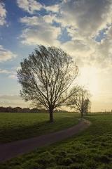 Bild des Tages 14.04.2011 - Der Weg
