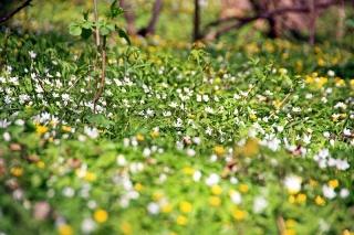 Bild des Tages 10.04.2011 - Frühling ist nun einmarschiert