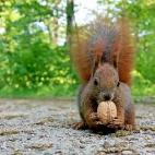 Bild des Tages 23.04.2011 - Eichhörnchen