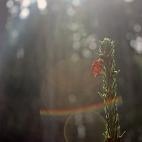 Bild des Tages 02.04.2011 - Sonnenlicht
