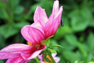 Bild des Tages 06.08.2011 - pretty fly
