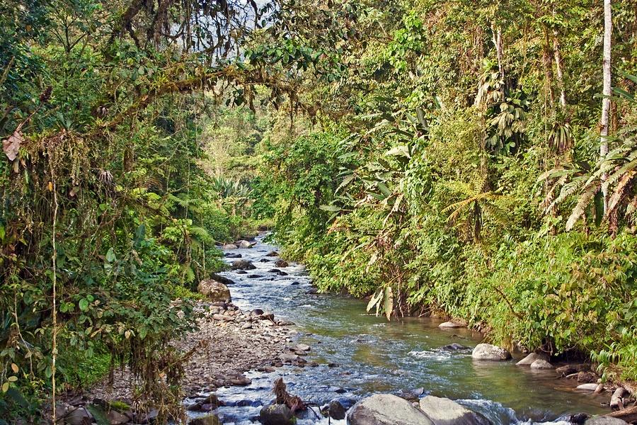 Bergnebelwald Ecuador