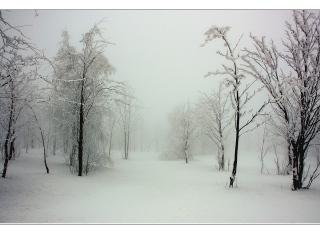 Bild des Tages 05.12.2010 - schneeweiß