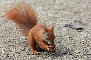 Bild des Tages 23.12.2010 - Eichhörnchenstudie