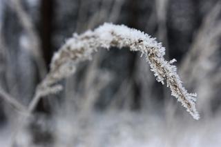 Bild des Tages 17.12.2010 - Frost
