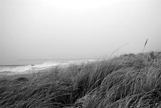 Bild des Tages 17.02.2011 - Düne
