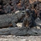 Meeresechsen Massage