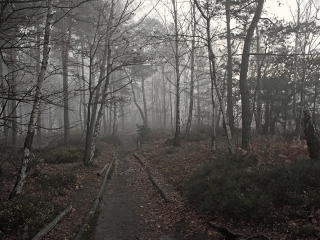 Bild des Tages 05.01.2011 - auf dem Lilienstein