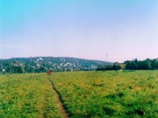 Bild des Tages 06.01.2011 - Elbwiesen