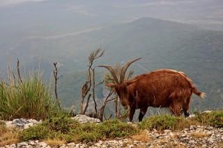 Bild des Tages 25.07.2011 - Verdon tierisch