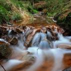 im Wald am Bach - I