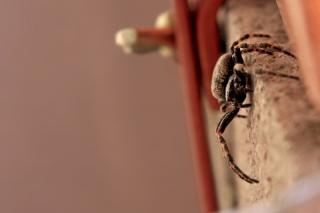 Bild des Tages 26.05.2011 - Spinne