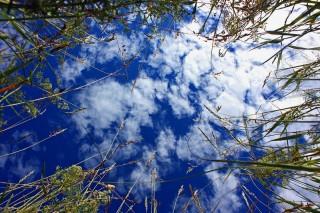 Bild des Tages 10.03.2011 - Gras