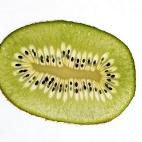 Bild des Tages 13.03.2011 - Kiwi
