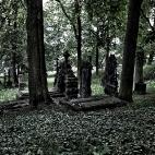Bild des Tages 08.11.2010 - Friedhof Görlitz