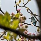 Kolibri im Stadtpark