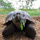 Riesenschildkröte 1
