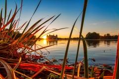 Moritzburg Sonnenaufgang mit Schilf