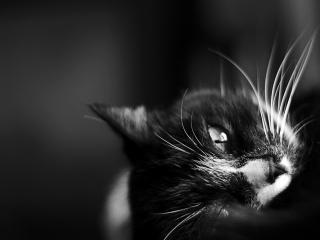 Bild des Tages 22.09.2010 - Kätzchen