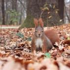 Eichhörnchen III