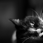 Kätzchen I